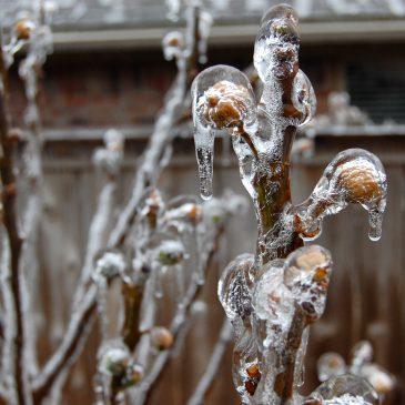 Mini Ice Storm
