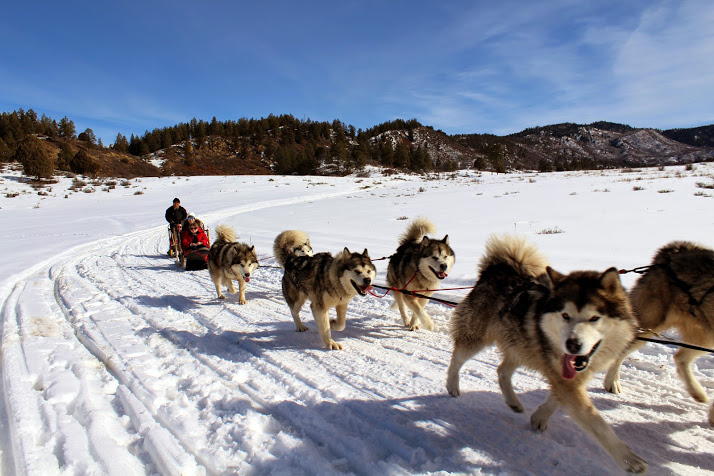pagosa dog sled