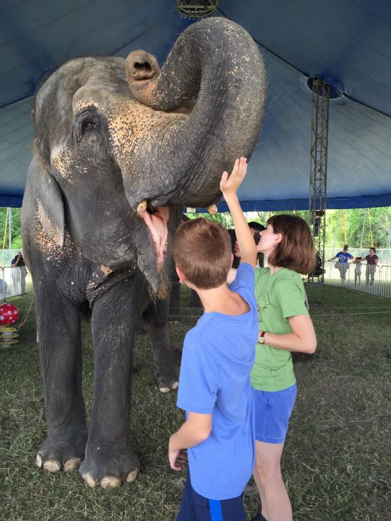 elephant santuary