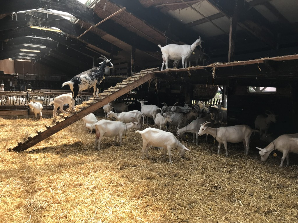 amsterdam goat farm