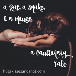 A Rat, A Snake, and A Mouse – A Cautionary Tale